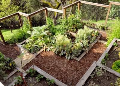 Подбираем растения